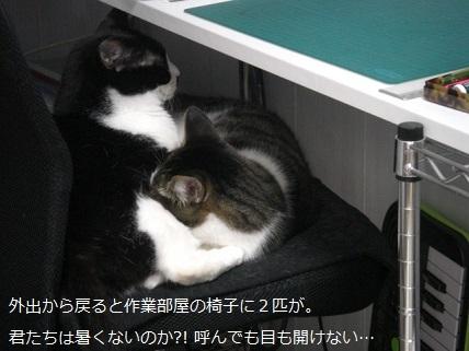 二匹のネコ.jpg