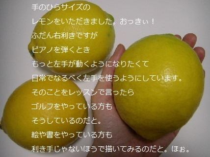 大きなレモン.jpg