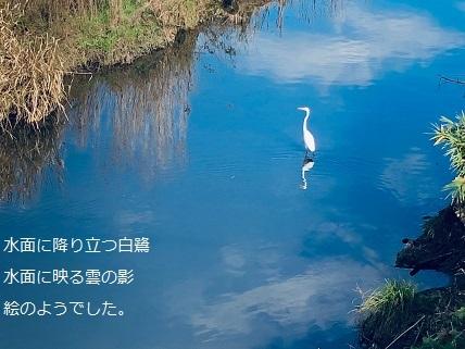 白鷺.jpg